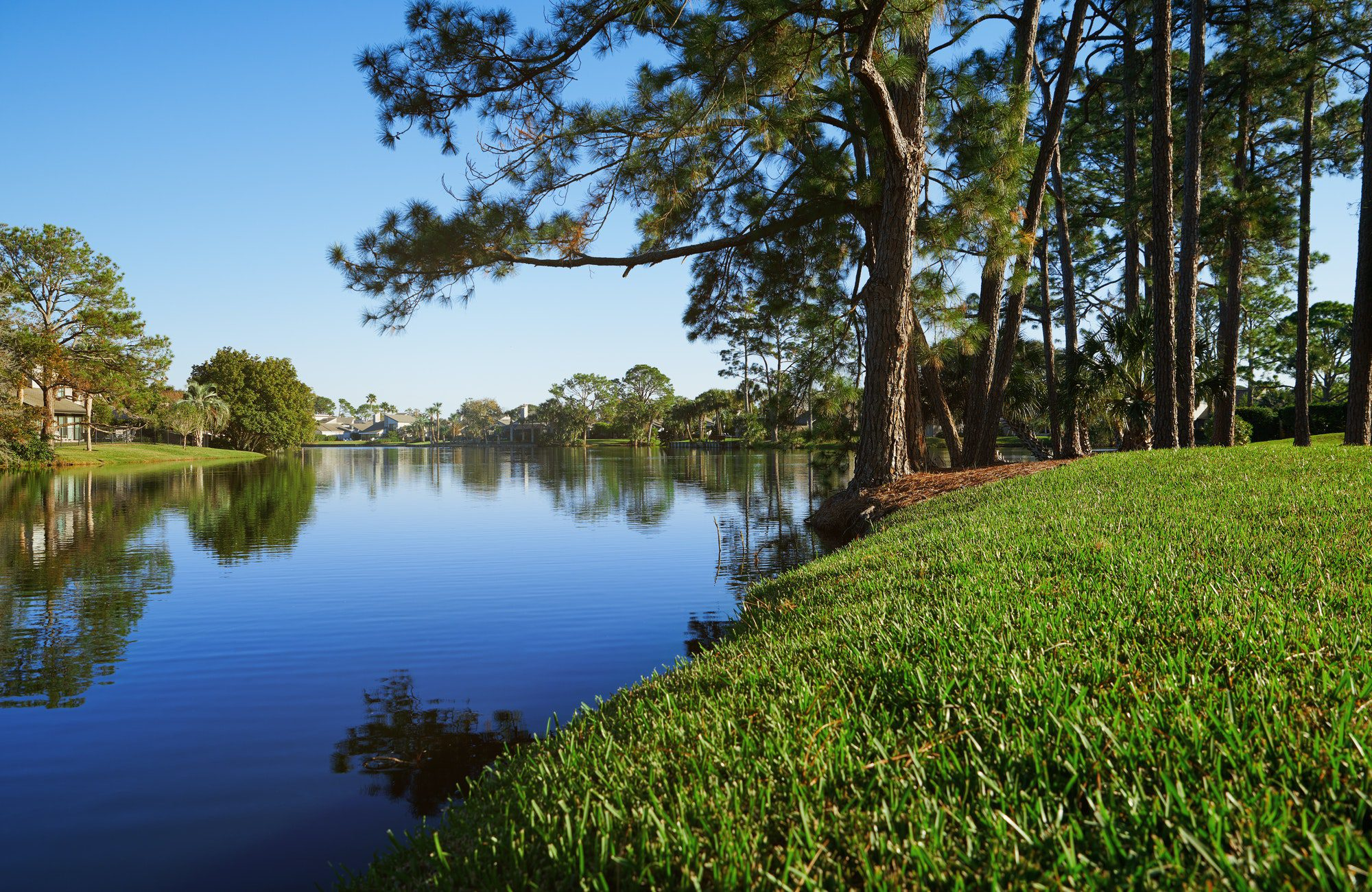 Palm trees growing next to the lake in Florida, USA