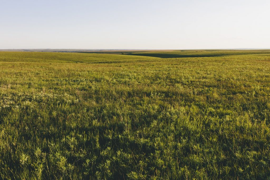 View across the wide open space of Kansa with the tall-grass Prairie Preserve in spring, with lush grass